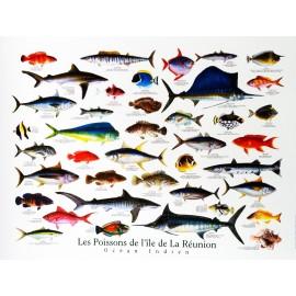 Posters des tropiques : les poissons de La Réunion Jade Edition.