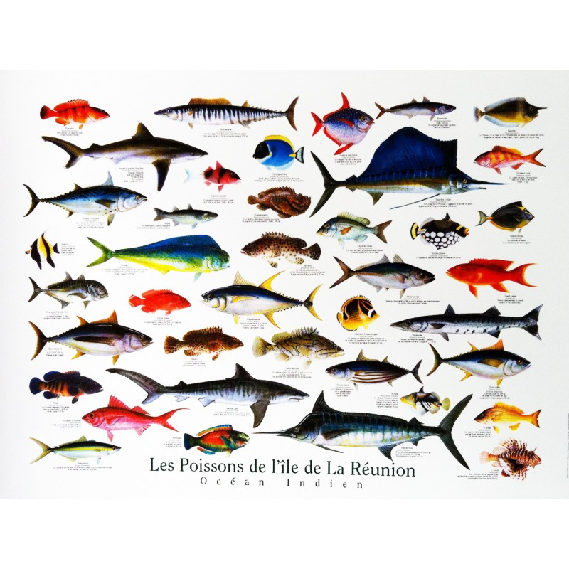 un poster encyclop dique des poissons de la r union par jade edition. Black Bedroom Furniture Sets. Home Design Ideas