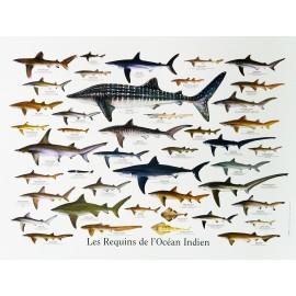 "Les posters ""Requins de La Réunion"" Jade Editions."