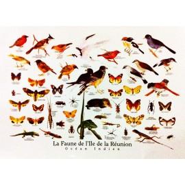 Les posters de la faune de La Réunion, Jade Editions.